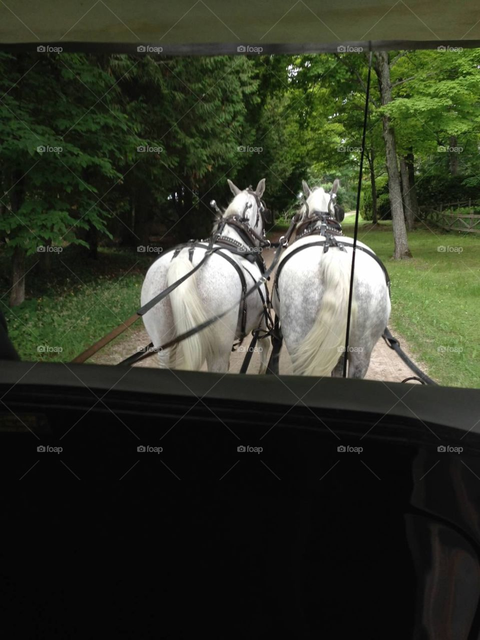 Horse Drawn Carriage . Riding in a horse drawn carriage touring Mackinaw Island, Michigan.