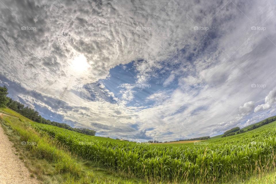 Cornfield below the Heavens