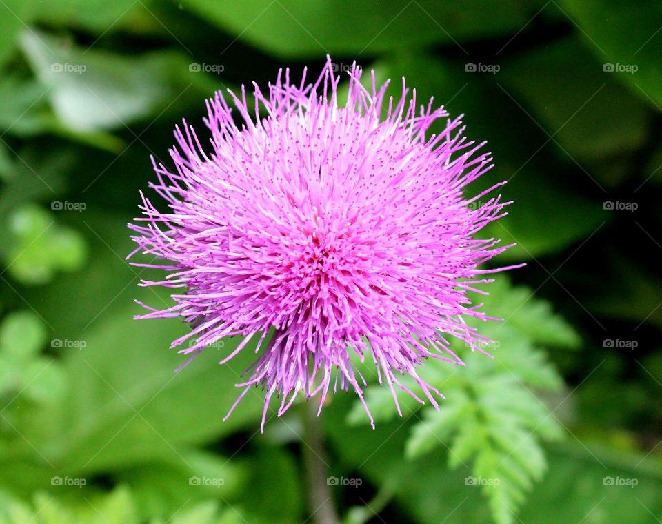 Nature, Flora, Flower, Leaf, Blooming