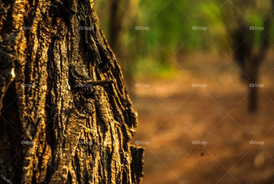 Close-up tree trunk