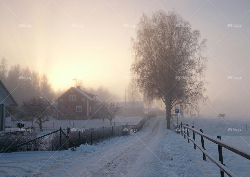 A misty winterday
